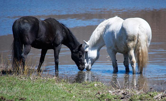 Horses at Fieldstone Farm