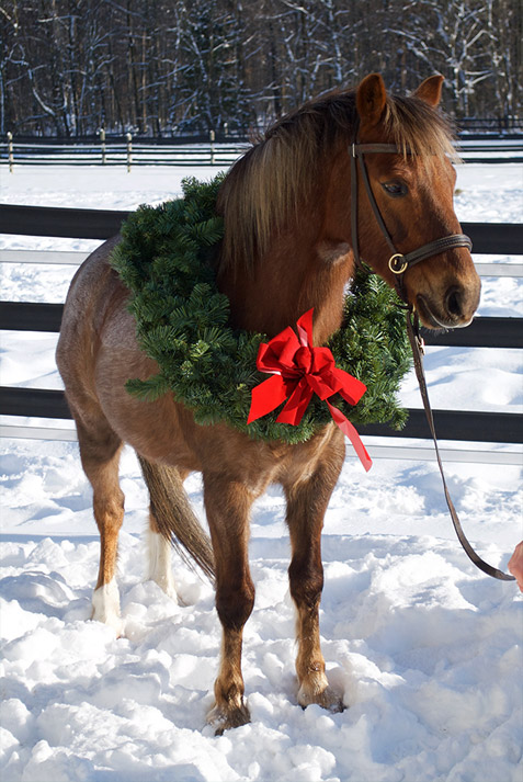 Pilgrim wreathed in joy