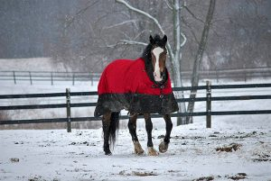 2017 holidays with therapy horse Arnie