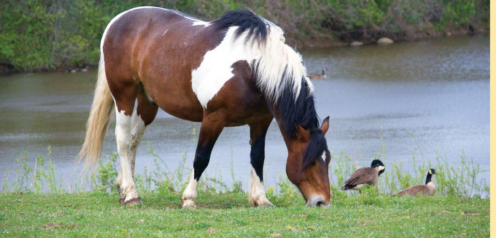 donate horses fieldstone farm therapeutic riding center