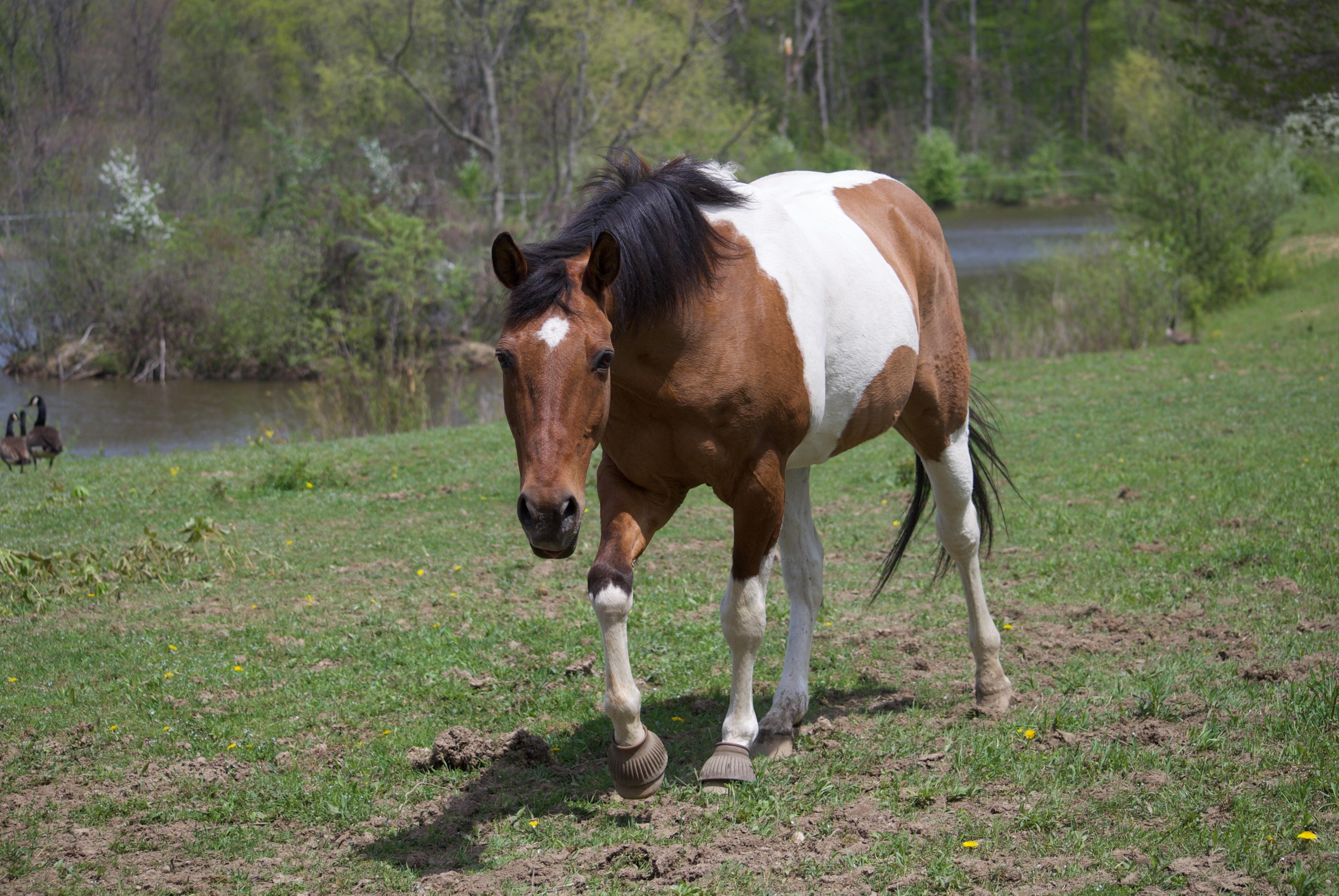 Razz Fieldstone Farm Therapeutic Riding Center