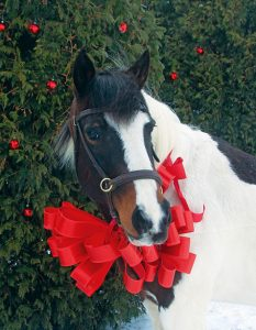 May your holiday season be wrapped in peace, joy and love. From all of your friends at Fieldstone Farm